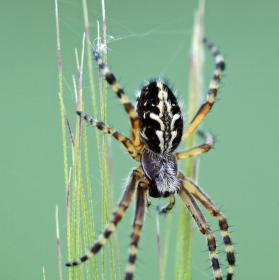 Pavouk na klasu