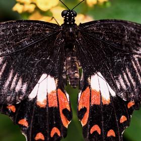 Motýlová :-)