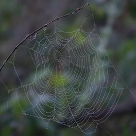 Bez pavoučka
