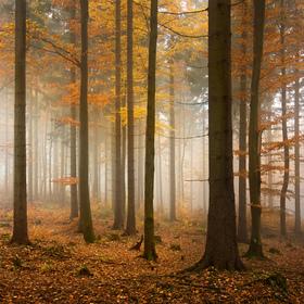 Podzimní lesy