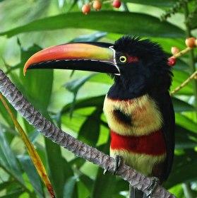 Costa Rica ...