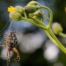 Pavouk:)
