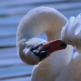 Labutí očista 2