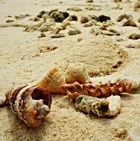 Maledivská pláž