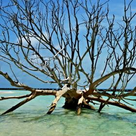 Maledivy - ráj na zemi III.
