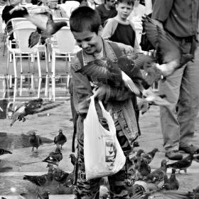 V obětí holubů