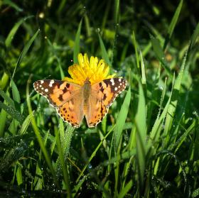 Motýl...