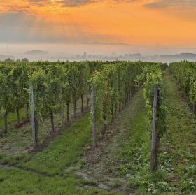 Kraj kde se rodí vynikající alsaské víno