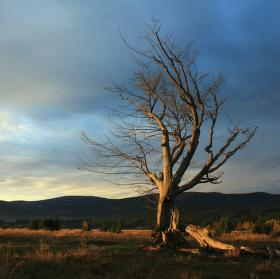 Pocta padlému stromu