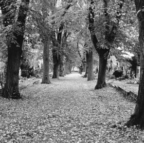 Hřbitovní alej...