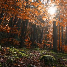 Ztracen v lese