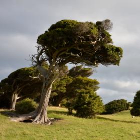 Za stromem je Jižní Pacifik