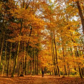 Zlatá cesta lesem