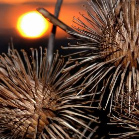 Západ slunce u Bodláků