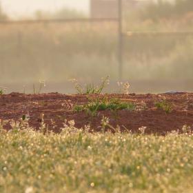 Ráno na baseballovém hřišti