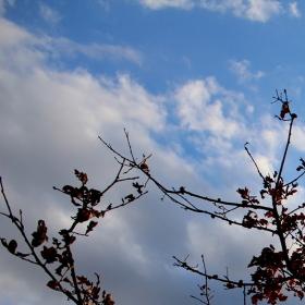 Three in Autumn