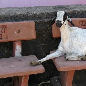 posaďte se