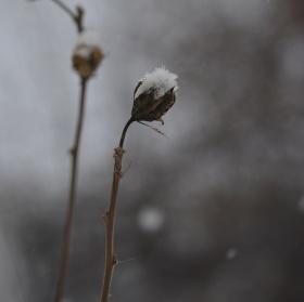 Takhle kvete sníh