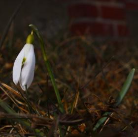Jaro už začíná
