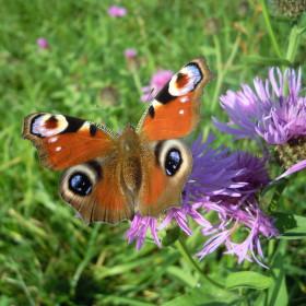 motýlí krása...