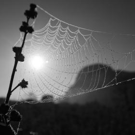 Slunce v síti