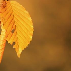 Podzimní smotání