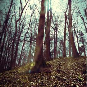 Lesem osvícen