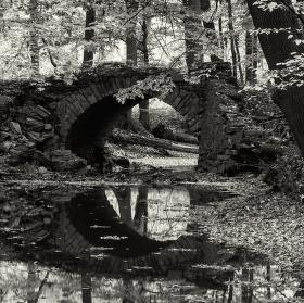 Lužní les XXIII - Přírodní rezervace Polanský les