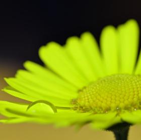Kráska ve žlutém