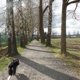 Jarní procházka po vysočině