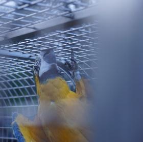 papouch ve vězení
