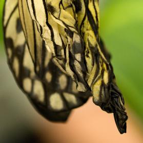 Sušení křídel