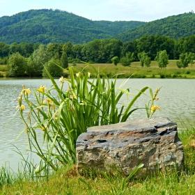na našem rybníčku