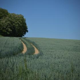 Kam ta cesta asi vede?