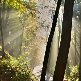 Sluneční paprsky v mlze