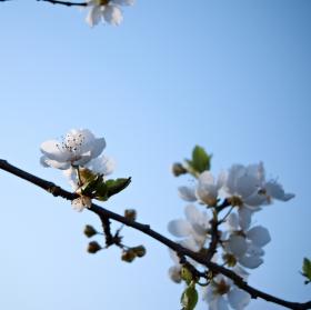 Vzpomínka na jaro II