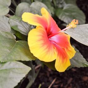 Letna krasa kvetov