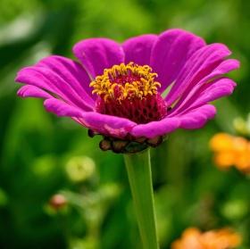Čimelice výstava květin ...III