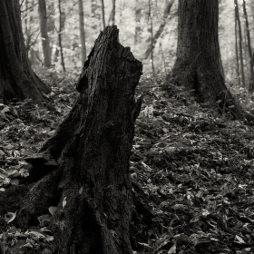Lužní les XXVIII - Přírodní rezervace Polanský les