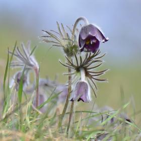 Květ jarních vzpomínek