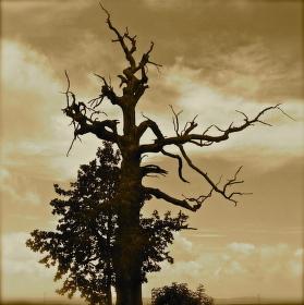 Polomrtvý strom