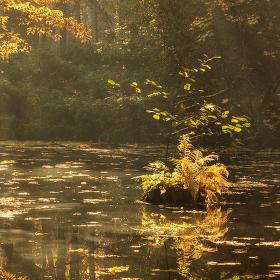 Lužní les XXXIV - Přírodní rezervace Rezavka