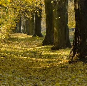 Podzimní cesta v aleji