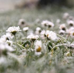 Zmrzlé krásky
