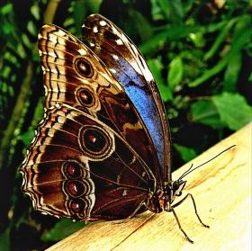 Reálný motýl ve Fata Morgáně