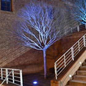 Stromy hrají barvami