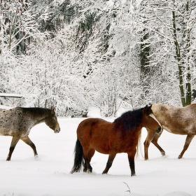 Dopolední procházka v  čerstvém sněhu.