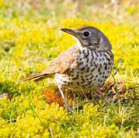 ptactvo na Šumavě