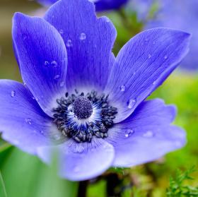 první květy na zahrádce