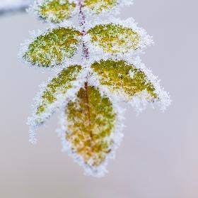 Čekání na zimu aneb o maličkých zázracích